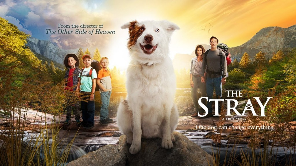 The Stray Movie: An Honest Review